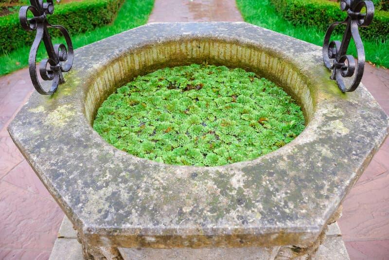 Salvinia natans in een steen goed stock afbeelding