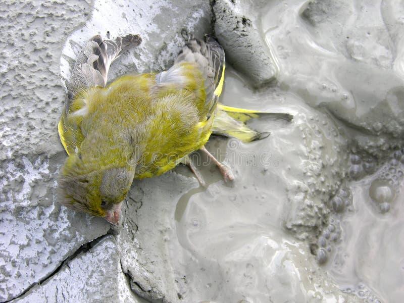 Salvo Gli Uccelli! Fotografia Stock Libera da Diritti
