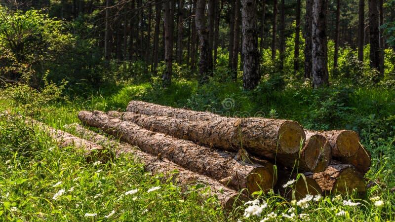 Salvo la foresta immagine stock libera da diritti