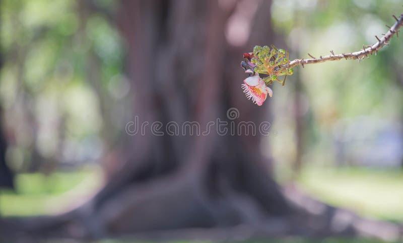Download Salzblume stockbild. Bild von betrieb, park, nave, flora - 90229967