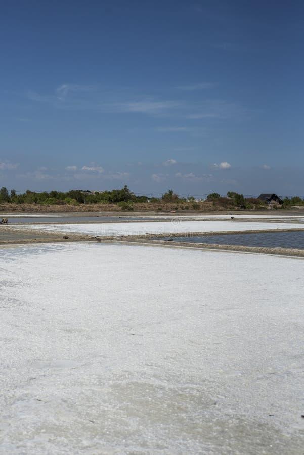 Salzsümpfe in Süd-Vietnam stockfotografie