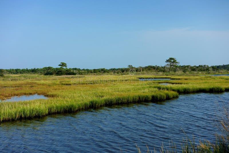 Salzwasser-Sumpfgebiete von Chincoteague-Bucht stockfotografie