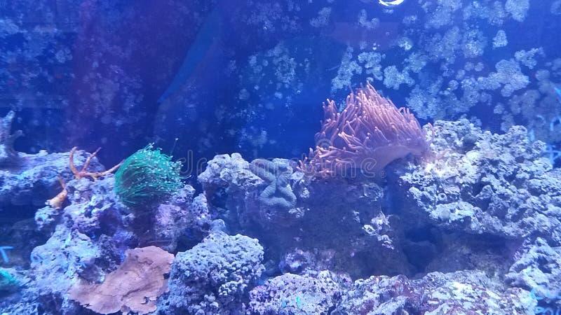 Salzwasseraquarium stockfotos