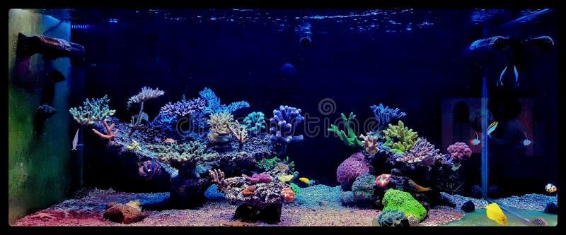 Salzwasseraquarium, Korallenriffbehälterszene zu Hause stockbilder