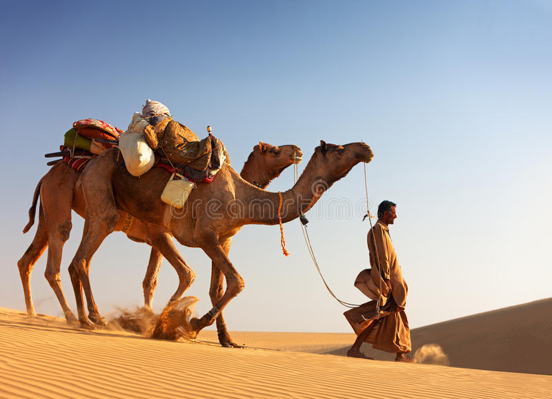 Camel man leads his camels across the Thar desert royalty free stock photo