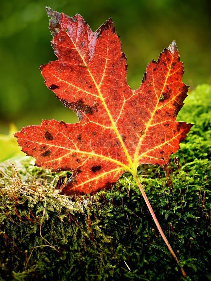 sam liści, zdjęcia royalty free