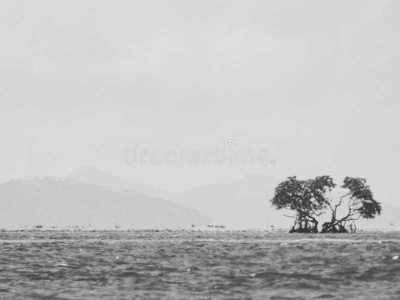 sam mangrowe obrazy stock