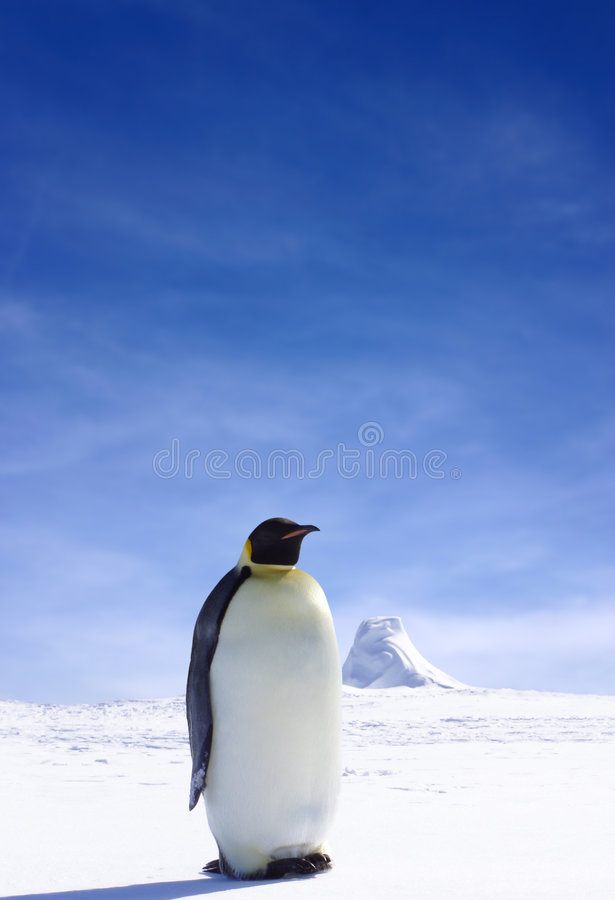 sam pingwin zdjęcie stock