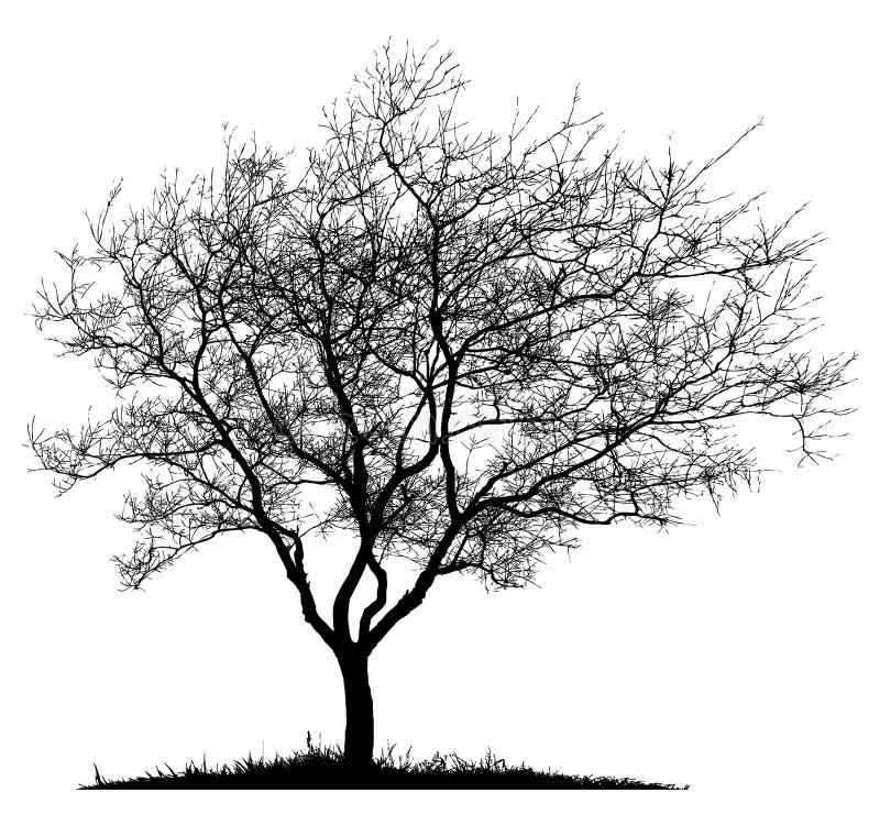 sam sylwetki drzewo royalty ilustracja