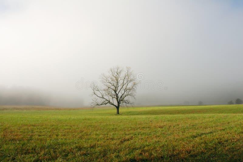 sama mgła pola drzewo obraz royalty free
