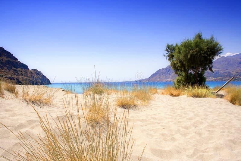 sama na plaży sandy obraz royalty free
