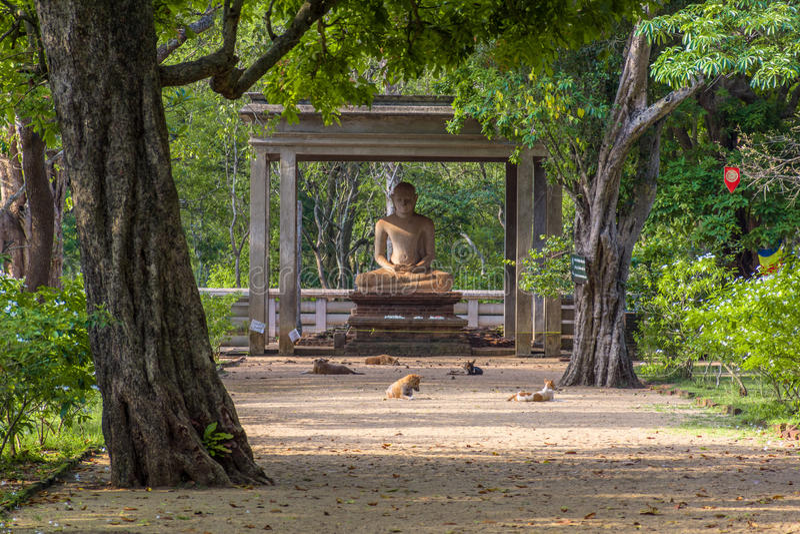 Samadhi雕象是雕象位于在Mahamevnawa公园在阿努拉德普勒,斯里兰卡 库存照片