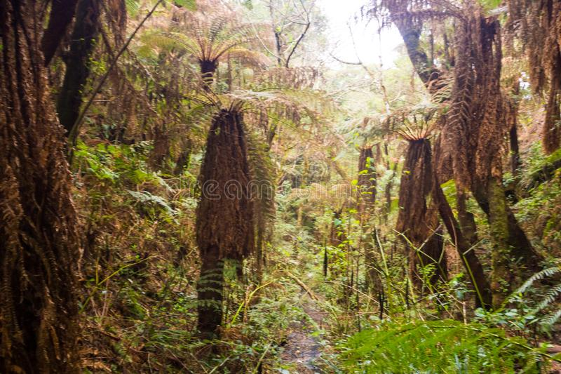 Samaipata, Bolivië - oude varenbomen in Nationaal Park Amboro, rai stock foto's