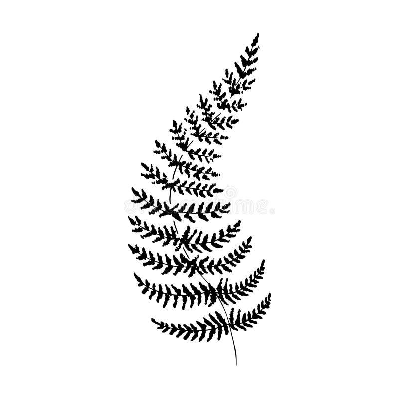 Samambaia do esboço Único ramo preto desenhado à mão da samambaia, isolado no fundo branco Ilustra??o do vetor ilustração do vetor