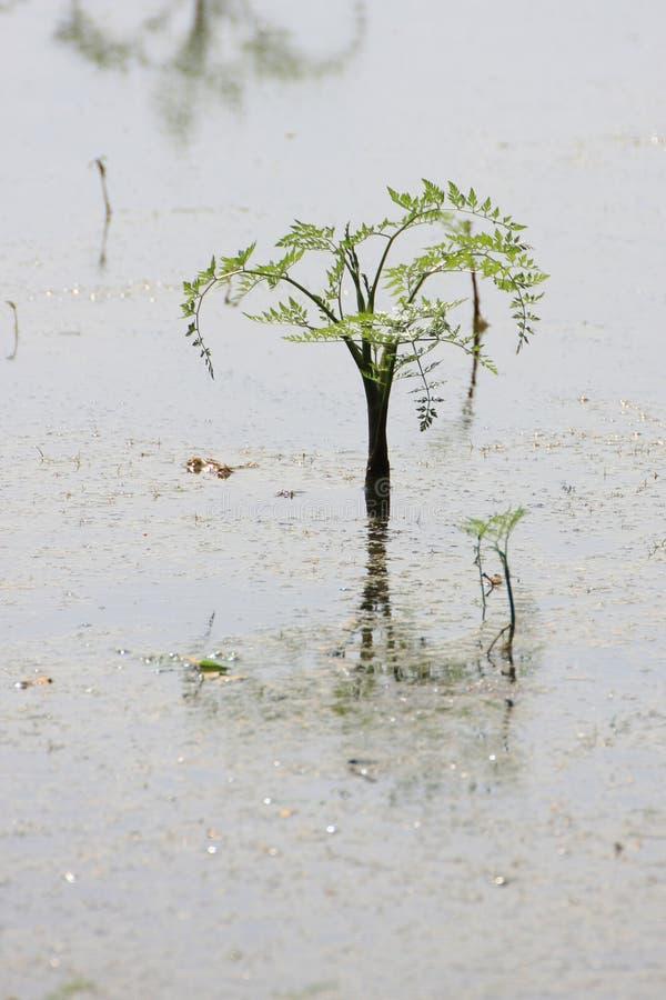 Samambaia na água fotos de stock
