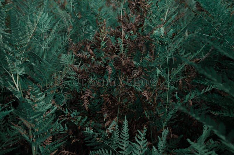 Samambaia na floresta tropical imagem de stock royalty free