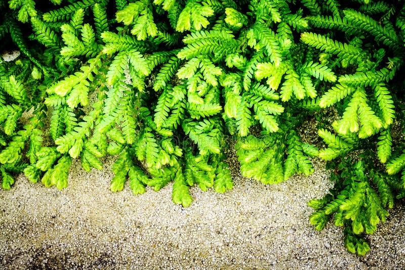 A samambaia verde abstrata sae do fundo imagens de stock
