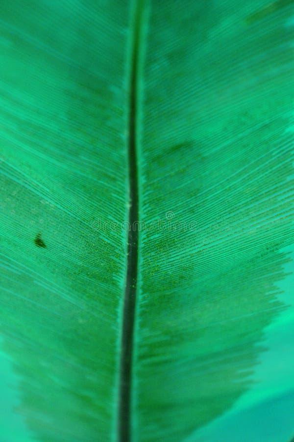 A samambaia verde sae do fundo fotografia de stock royalty free