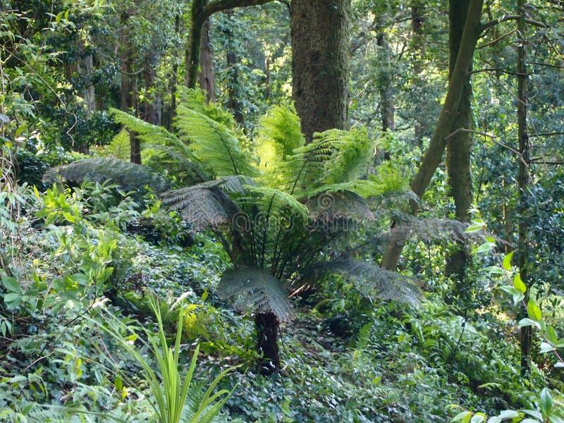 Samambaias arborescentes e outras plantas tropicais no jardim botânico de Parque a Dinamarca Pena, Sintra, Portugal fotos de stock