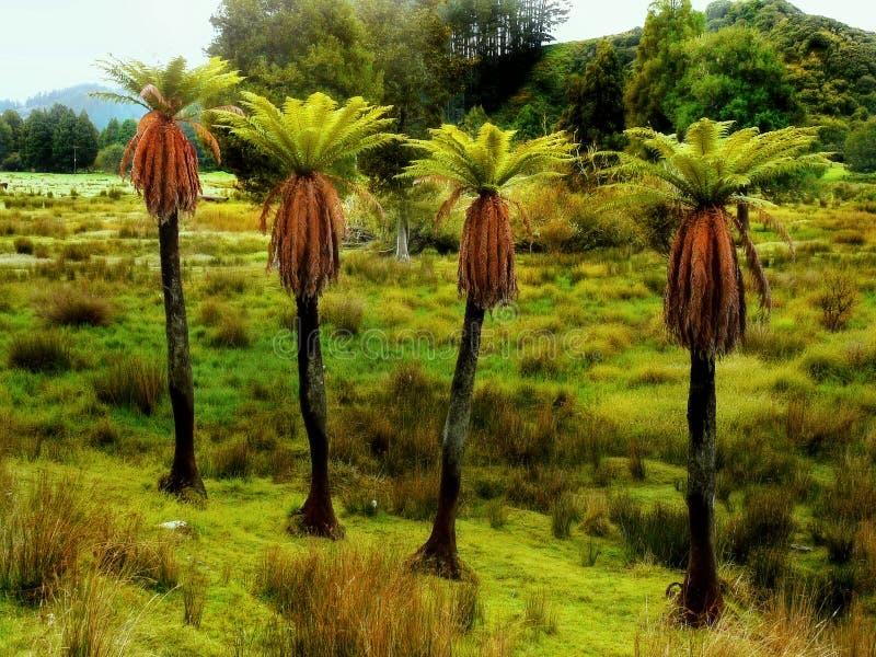 Samambaias de árvore verdes foto de stock