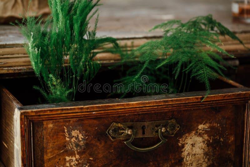Samambaias em umas caixas abertas de uma caixa da caixa do vintage de gavetas velha mobília envelhecida, projeto imagem de stock