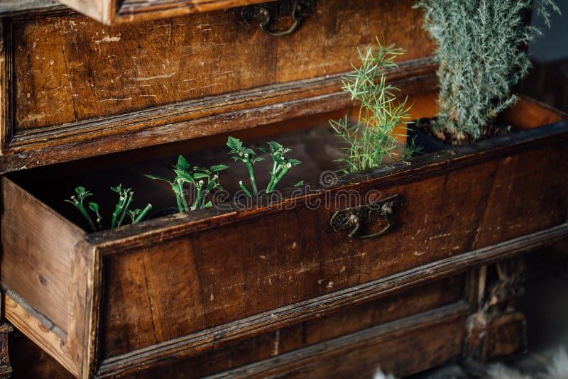 Samambaias em umas caixas abertas de uma caixa da caixa do vintage de gavetas velha mobília envelhecida, projeto foto de stock royalty free