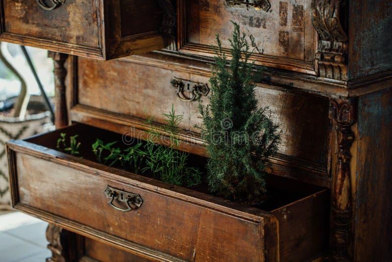 Samambaias em umas caixas abertas de uma caixa da caixa do vintage de gavetas velha mobília envelhecida, projeto fotos de stock
