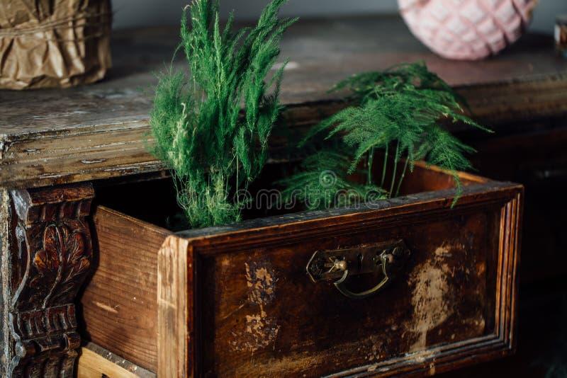 Samambaias em umas caixas abertas de uma caixa da caixa do vintage de gavetas velha mobília envelhecida, projeto fotos de stock royalty free
