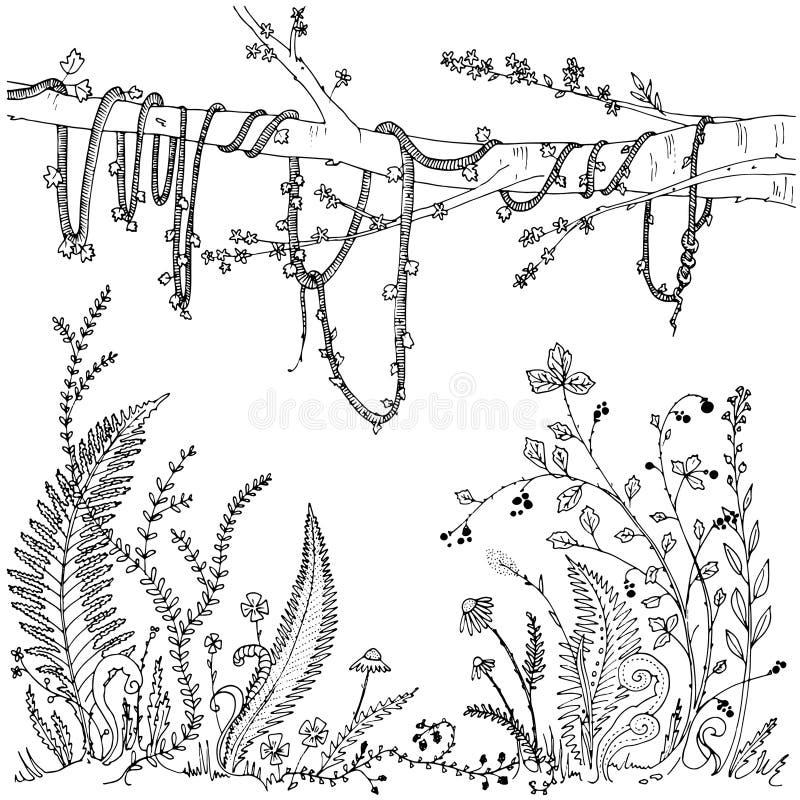 Samambaias, flores, videiras e bagas em uma floresta, vegetação densa Página imprimível para adultos, atividade da coloração do a ilustração stock
