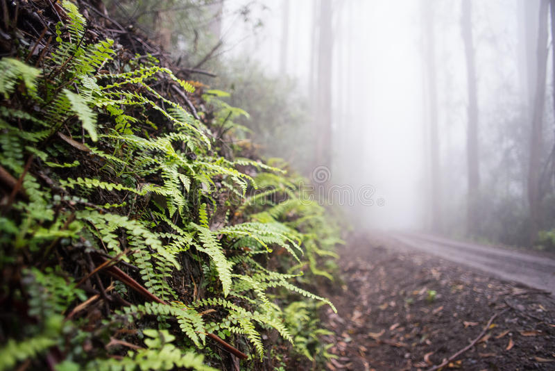 Samambaias na floresta fotografia de stock royalty free