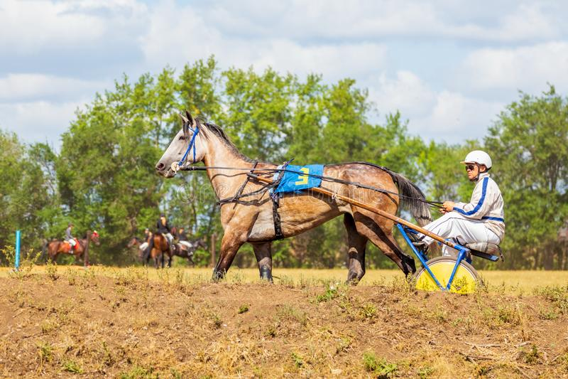 Samara, agosto de 2018: Un jinete monta un caballo aprovechado a un carro ligero imagen de archivo libre de regalías
