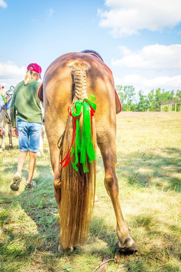 Samara, agosto 2018: Una coda di cavallino è intrecciata in una treccia con i nastri immagini stock libere da diritti