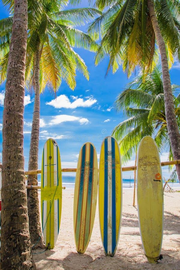Samara Costa Rica, Juni, 26, 2018: Utomhus- sikt av surfingbrädan och palmträdet på strandbakgrund i en ursnygg solig dag arkivbild