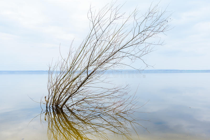 Samara Volga baleen Rzeczny piękno natura zdjęcie stock