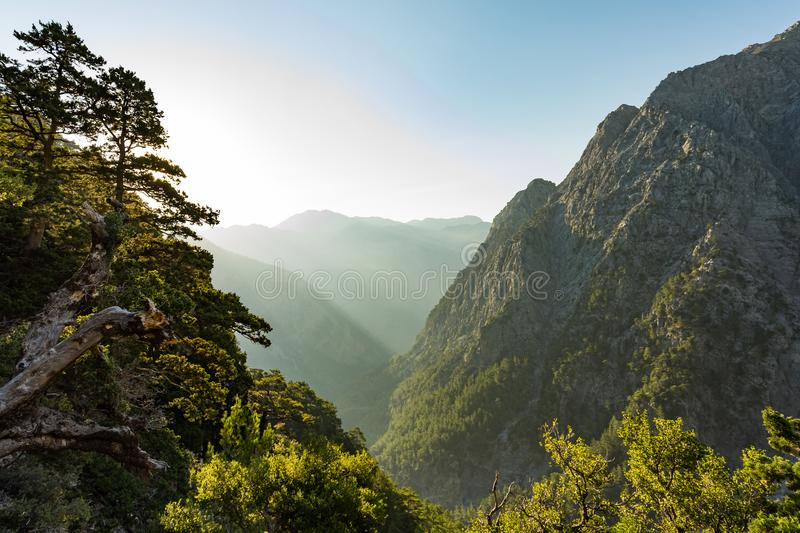 Samaria gorge forest in mountains pine fir trees green landscape background. Believed to be one of the most scenic national parks in Europe. Samaria, Greece royalty free stock photos