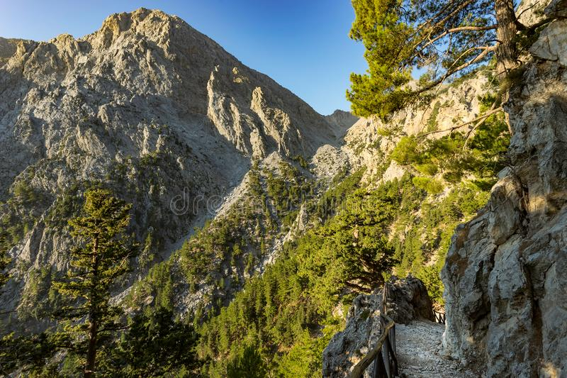 Samaria gorge forest in mountains pine fir trees green landscape background. Believed to be one of the most scenic national parks in Europe. Samaria, Greece stock photography