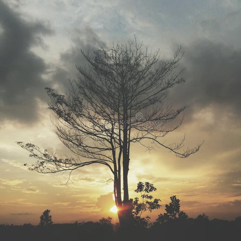 samarinda ηλιοβασιλέματος στοκ εικόνες