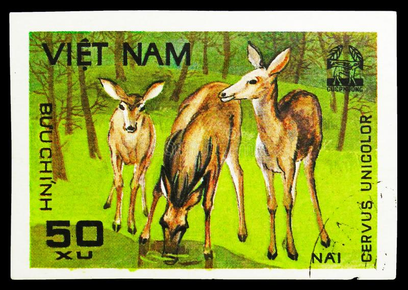 Sambar (Cervus unicolor), Animals from Cuc Phuona Nati Forest serie, circa 1981. MOSCOW, RUSSIA - SEPTEMBER 26, 2018: A stamp printed in Vietnam shows Indian royalty free stock image