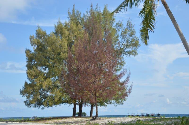 Samber Gelap海岛, Kotabaru,南婆罗洲,印度尼西亚 免版税库存图片