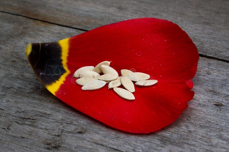 Samen auf dem Blumenblatt lizenzfreie stockfotografie