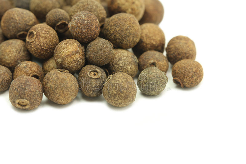 Samen der Jamaikapfeffernahaufnahme stockfotografie