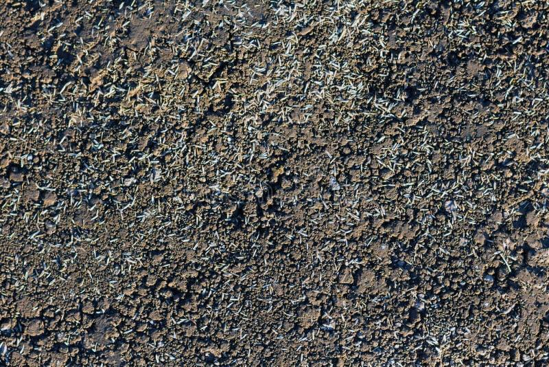 Samen zerstreut aus den Grund für das Pflanzen, naher hoher Hintergrund lizenzfreies stockbild