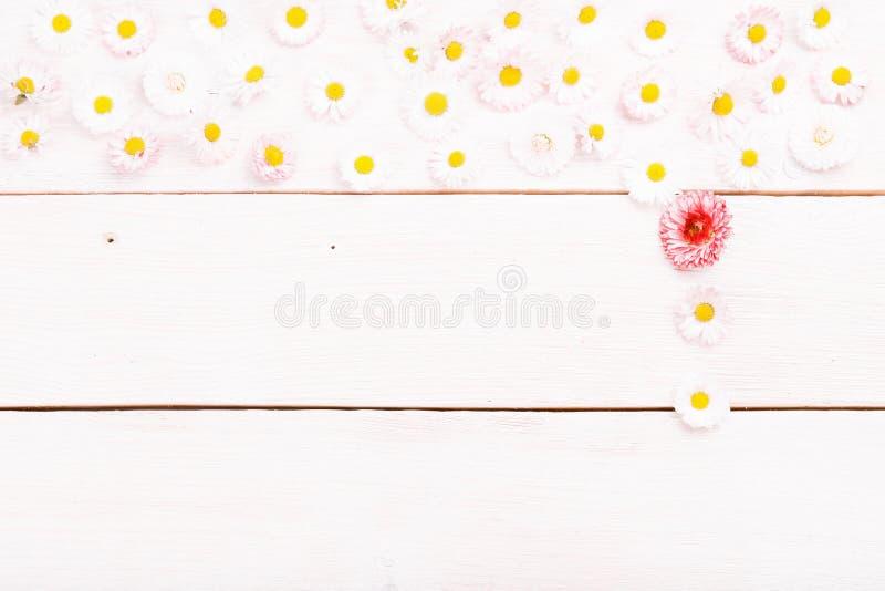 Samenstelling, kadermadeliefjes op witte houten raad Kleine bloemen op met de hand gemaakte houten lijstachtergrond Achtergrond m stock afbeelding