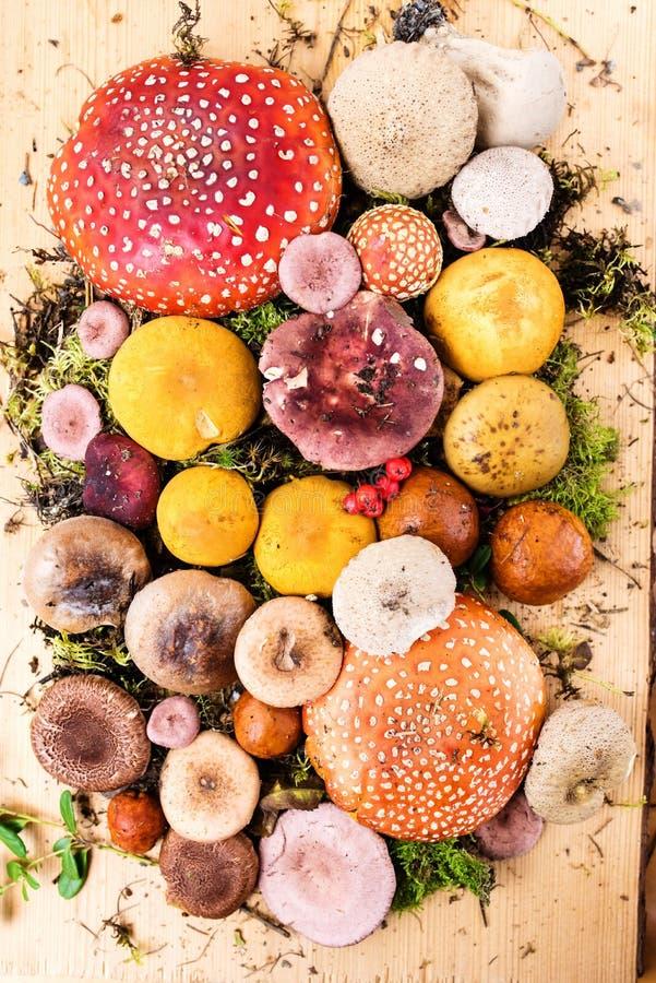 Samenstelling met een grote verscheidenheid van paddestoelspecies stock foto