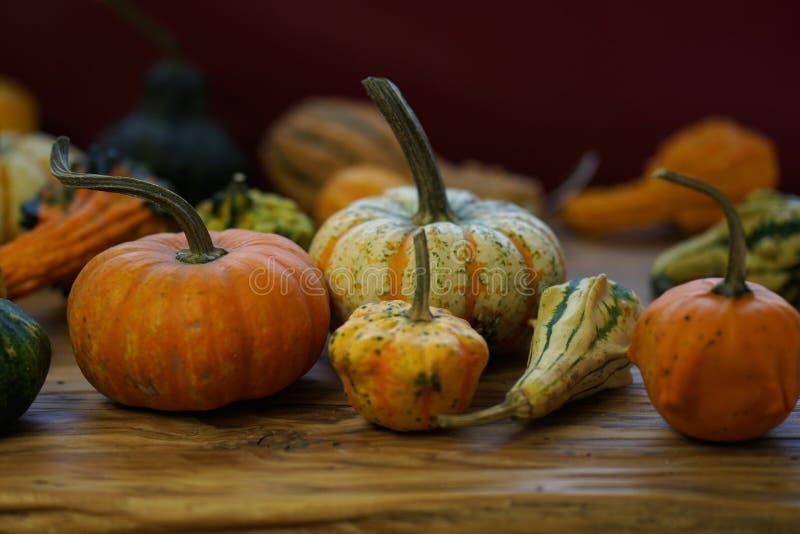 Samenstelling met Halloween-pompoenen royalty-vrije stock foto