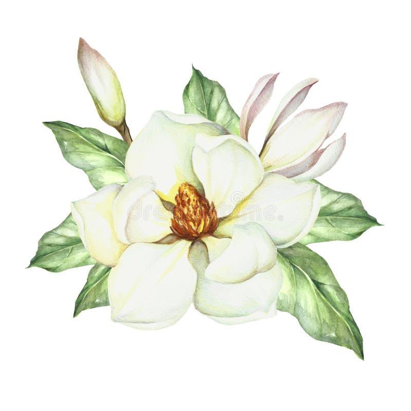 Samenstelling met magnolia De hand trekt waterverfillustratie royalty-vrije illustratie