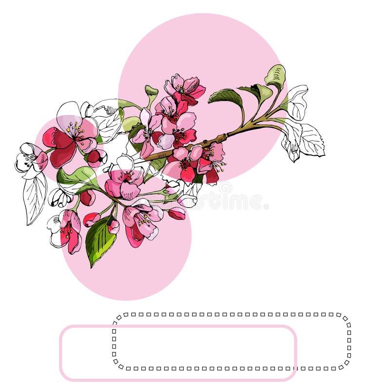 Samenstelling met tot bloei komende roze tak van appelboom, cirkels en kader Hand getrokken inkt en gekleurde schets van malusblo stock illustratie