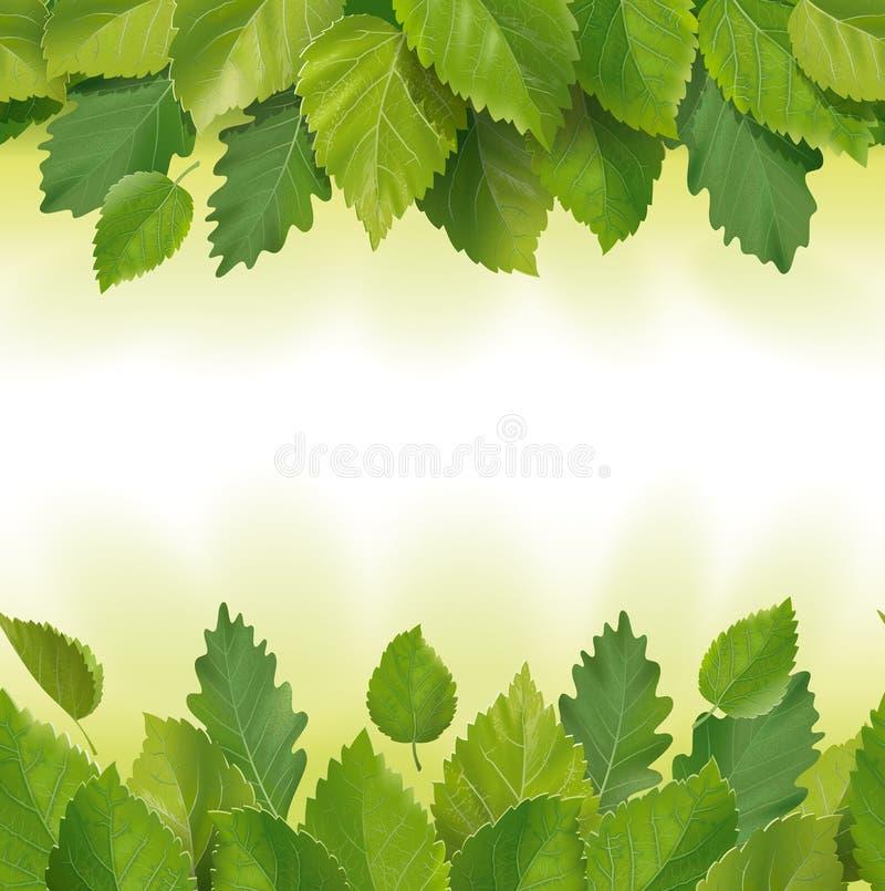Samenstelling van de bladeren (berk, eik) royalty-vrije illustratie