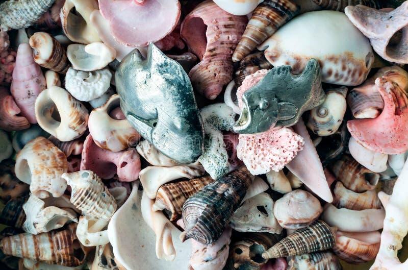 Samenstelling van overzeese shells en zilveren juwelenvissen royalty-vrije stock foto's