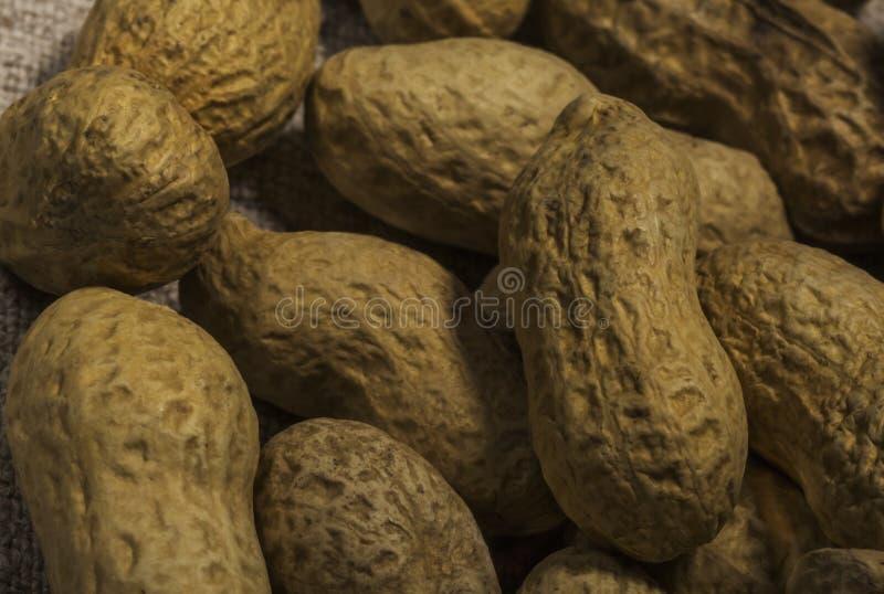 Samenstelling van pinda's die olie dienen te maken, pindakaas Groot voor gezonde en dieetvoeding Concept van: droge specerijen, royalty-vrije stock afbeeldingen